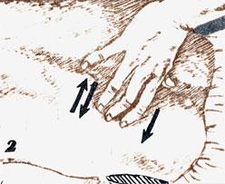 Техника приемов массажа и их влияние