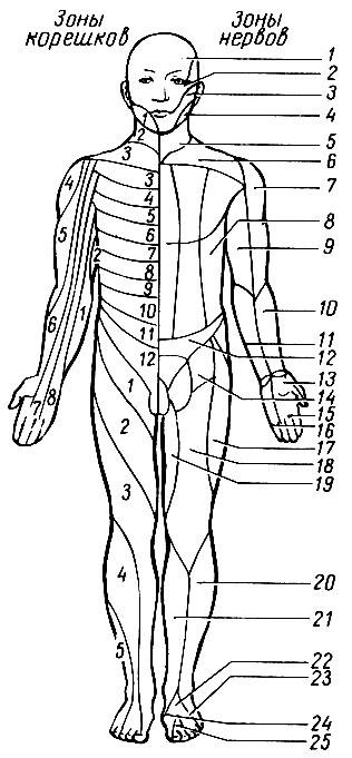 Массаж на руку на лучевой нерв