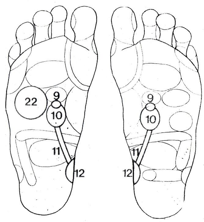 Рефлекторные зоны на стопе: почки (10), надпочечники (9), мочеточники (11), мочевой пузырь (12), печень - желчный пузырь (22)