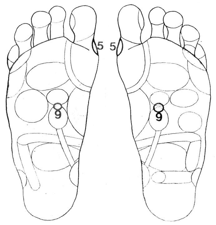 Рефлекторные зоны на стопе: надпочечники (9), паращитовидные железы (5)
