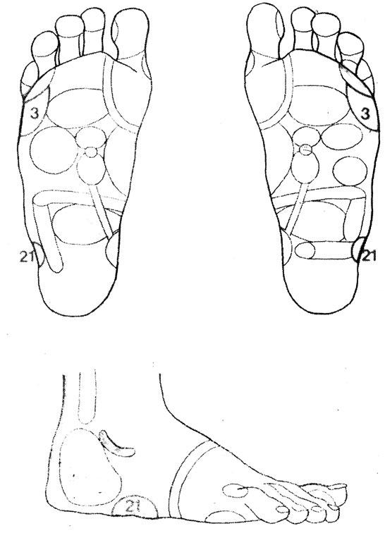 Рефлекторные зоны на столе: массировать следует все те зоны, которые связаны с соответствующими суставами, например: коленные суставы с зоной (21), плечевые - с зоной (3) и т. д.