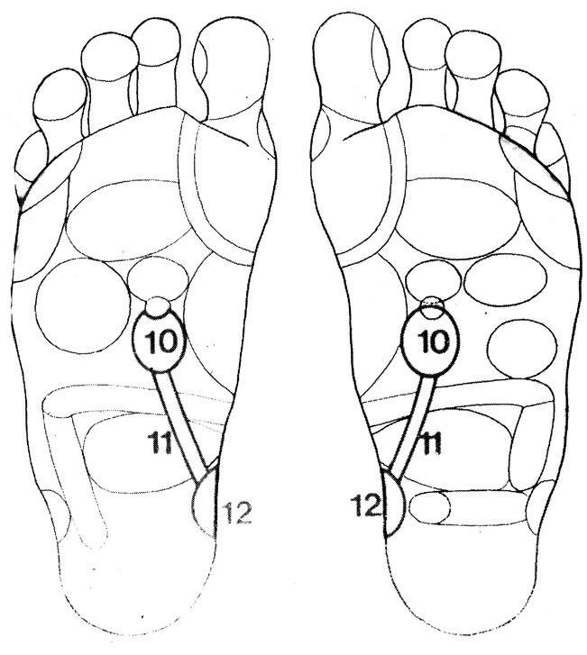 Рефлекторные зоны на стопе: почки (10), мочеточники (11), мочевой пузырь (12)