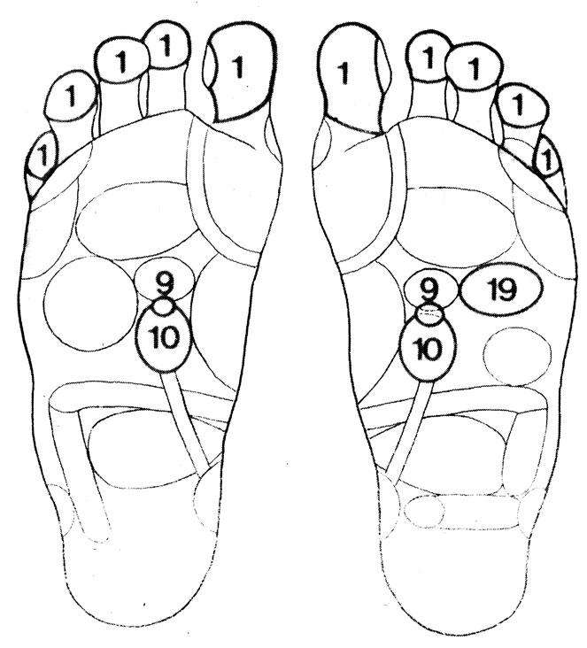 Рефлекторные зоны на стопе: почки (10), надпочечники (9), сердце (19), голова (1)