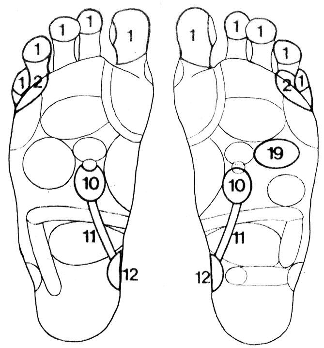 Рефлекторные зоны на стопе: голова (1), уши (2), почки (10), мочеточники (11), мочевой пузырь (12), сердце (19)