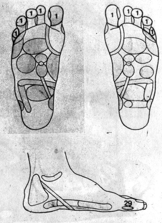 Рефлекторные зоны на стопе: голова (1), шейный отдел позвоночника (29)