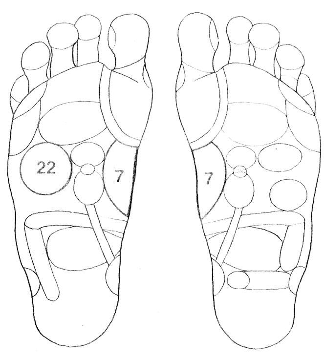 Рефлекторные зоны на стопе: желудок (7), печень - желчный пузырь (22)