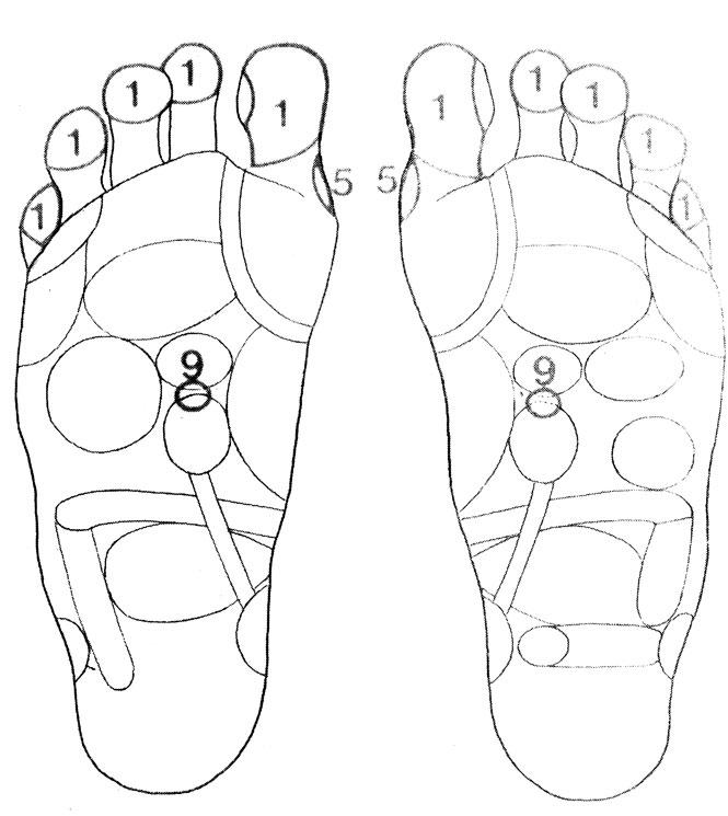 Рефлекторные зоны на стопе: паращитовидные железы (5), надпочечники (9), голова (1)
