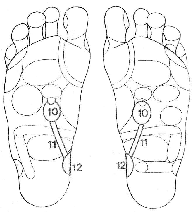 Рефлекторные зоны на стопе: почки (10), мочеточники (11) мочевой пузырь (12)