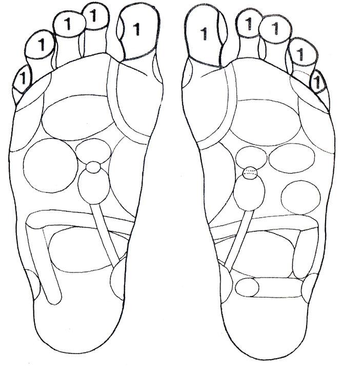Рефлекторные зоны на стопе: голова (1), яичники (24), матка (27)