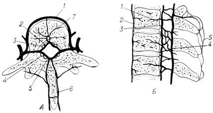 Схема шейного отдела позвоночника фото 602