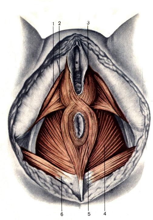 ева вульва с крупным клитором