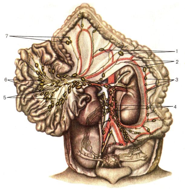 Лимфаденопатия при беременности